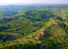 Collio sloveno, Slovenia